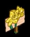 Mastery Daffodils
