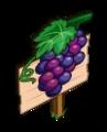 Mastery Grapes