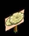 Mastery Pattypan Squash