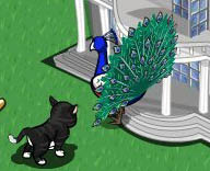 farmville_peacock