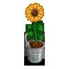 deco_bucketsunflower