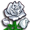 flower_rosewhite_icon