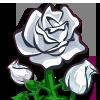 flower_rosewhite_icon