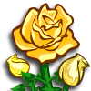 flower_roseyellow_icon
