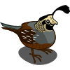 valley quail cfp