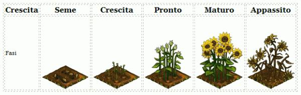 Frontierville seme del girasole e collezione for Piantare girasoli