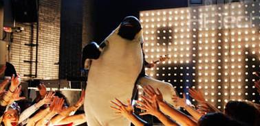 pino il pinguino